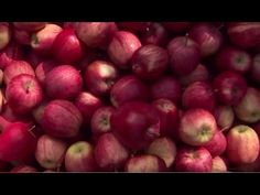 """The many properties of the apple: an """"all-inclusive"""" valley for the spirit and the body #trentino #southtyrol #italy #expo2015 #experience #visit #discover #culture #food #history #art #nature"""