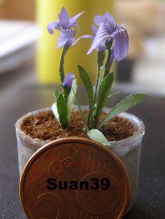 Los iris más pequeños que he me salieron ¿también los podremos regar?