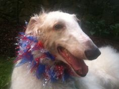 This Holiday, Create a Fourth of July Zen Zone for Your Dog - Arlington, MA Patch