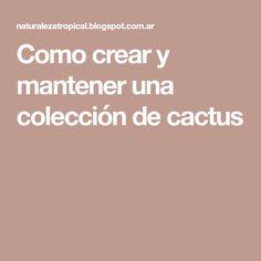 Como crear y mantener una colección de cactus