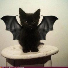 lotito en halloween solo necesita las alas