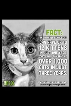Spay and neuter! Sad, but true!