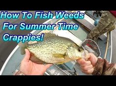 How To Fish Weeds For Summer Time Crappies Crappie Fishing Tips, Fishing Kit, Fishing Guide, Gone Fishing, Carp Fishing, Kayak Fishing, Fishing Boats, Fishing Tricks, Fishing Tackle