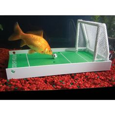 The Fish Agility Training Set -   This complete set of underwater activities allows you to train your pet fish to perform a series of agility maneuvers, including swimming through hoops, pushing a soccer ball, navigating a slalom course, and more. The set includes two bases and all training paraphernalia and uses techniques similar to those used to modify circus animal behavior-Hammacher Schlemmer