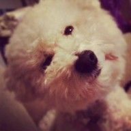Dog of the Week Candidate - PuppyDogSwag.com | Repin to Vote!