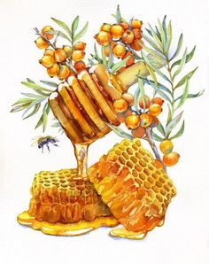 Honey watercolor drawing: images found in Yandex. Watercolor Food, Watercolor Drawing, Watercolor Paintings, Botanical Illustration, Watercolor Illustration, Walle Y Eva, Food Sketch, Bee Art, Food Drawing