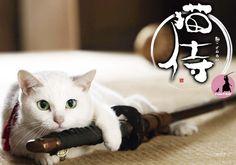 Huluで猫侍シーズン1をすべて見た … 面白いなこのドラマ 明日の夜はBSフジで 玉乃丞、江戸へ行く の、放送があるので楽しみである(キリッ 猫好きな人達の為に 宣伝である(キリッ