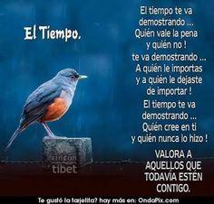 Imagenes+de+aves+con+consejos+para+la+vida