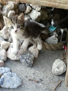 Two Brothers Feed a Fearful Feral Cat, Months Later, She Brings Her Babies to Meet Them - Love Meow Automatic Cat Feeder, Found Cat, Best Cat Food, Good Environment, Sweet Stories, Feral Cats, Two Brothers, Funny Cats, Kittens