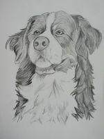 Dog by LuccisArt