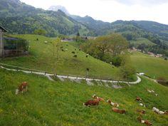 Swiss idyll. Gruyères