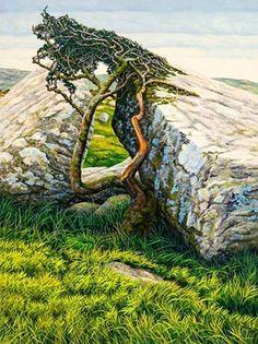 Sarah Vivian - Thorn, Stone & Time. Bodmin Moore, Cornwall.