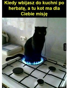 For Sale Munchkin Cats Memes Humor, Man Humor, Best Memes, Dankest Memes, Haha Funny, Funny Cute, Hilarious, Funny Stuff, Funny Mems