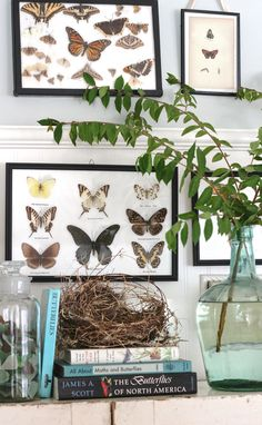 mounted butterfly display