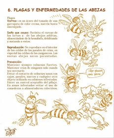 La Familia de la Apicultura - The Beekeeping of Family: Manual Apícola Ilustrado - Beekeeping Illustrated Manual. Drone Bee, Bee Hive Plans, Raising Bees, Bee Boxes, Bee Farm, Golden Honey, Queen Bees, Bee Keeping, Old Things