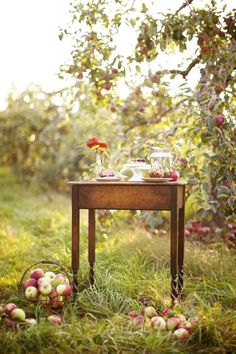 Fall Inspiration | Fall Photography | Apple Orchard | Perfectly Imperfect