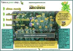 Health benefits of Rhodiola: ❥ Antioxidants, helps treat MS, mood enhancer, appetite suppressant.and the list keeps going. Love my fizz sticks! Home Health Remedies, Holistic Remedies, Homeopathic Remedies, Holistic Healing, Natural Remedies, Anti Anxiety Herbs, Foods For Brain Health, Mood Enhancers, Improve Concentration