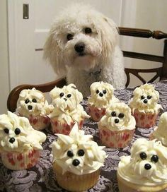 These super easy little maltese dog cupcakes are sure to be a hit