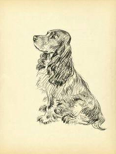 1937 Antique Cocker Spaniel Dog Print Vintage Lucy Dawson Spaniel Dog Art Decor Gallery Wall Gift for Birthday Friend by plaindealing on Etsy Pencil Drawings Of Animals, Animal Sketches, Art Sketches, Art Drawings, Antique Dog Prints, Cocker Spaniel Dog, Springer Spaniel, Vintage Dog, Dog Portraits