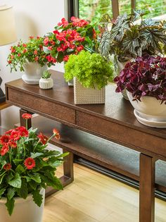 Here's helpful tips on how to successfully bring your favorite outdoor plants inside for the winter!