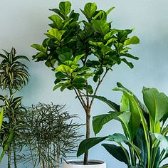 9 super-chic houseplants: Striking shapes, sizes, and colors make them more spectacular than ever. Plus: Easy care tips | Sunset