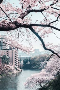 Find images and videos about spring and japan on We Heart It - the app to get lost in what you love. Aesthetic Japan, Japanese Aesthetic, Travel Aesthetic, Aesthetic Backgrounds, Aesthetic Wallpapers, Cherry Blossom Japan, Cherry Blossoms, Nature Photography, Travel Photography