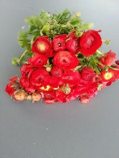red renoncules