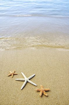 starfish-on-beach-mary-van-de-ven.jpg 598×900 pixels