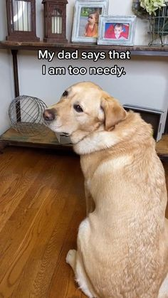 Cute Funny Dogs, Funny Vid, Cute Funny Animals, Hilarious, Funny Animal Jokes, Funny Animal Pictures, Animal Memes, Cute Dogs And Puppies, Baby Dogs