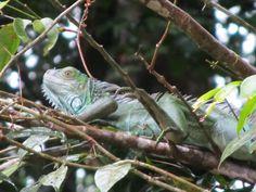 Costa Rica - Tortuguero, 2012-13