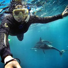 Swimming with wild dolphins in Kaikoura, South Island, New Zealand!