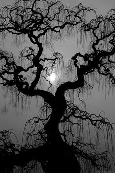 really eerie would make Halloween extra spooky. -is really eerie would make Halloween extra spooky. Halloween Photos, Spooky Halloween, Spooky Trees, Shoot The Moon, Moon Photography, Beautiful Moon, Beautiful Places, Tree Silhouette, Dark Forest