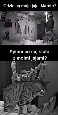 Normalnie jak w rick and morty Why Are You Laughing, Polish Memes, Funny Mems, Wtf Funny, Man Humor, Best Memes, Funny Animals, Cool Photos, Haha
