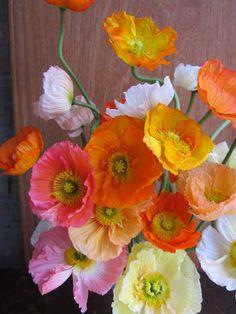 Poppies | Flowers | Gardening | Pink Yellow White Orange