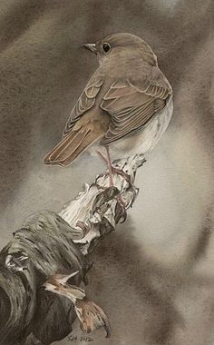 Cottage in the brambles.colored pencil drawings- Pencil portrait of bird
