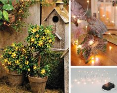 Add some sparkle to your fall decor with Outdoor Battery-Operated Lights.