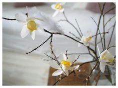 Suodatinpaperi askartelu pääsiäinen pajunkissa pajunoksa narsissi Eggs, Plants, Egg, Flora, Egg As Food, Plant, Planets