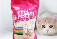 Find More Cat Health Supplies http://www.aliexpress.com/store/1379660