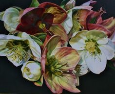 "Twighlight Helebores by Sarah Caswell.. 2012.. ""Silver Moonlight Helebores in bright sunlight on deep green background."""
