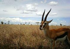 Beautiful horns :D