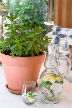 From fleas to scratches, treat your cat or dog's woes the natural way using organic guru Margaret Roberts' guide to making remedies from home-grown herbs. Healing Herbs, Open Plan Living, Planter Pots, Seeds, Remedies, Home And Garden, Organic, Homemade, Make It Yourself