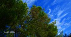 Azules y verdes
