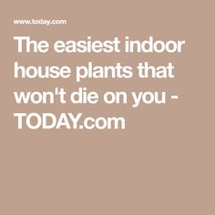 The easiest indoor house plants that won't die on you - TODAY.com