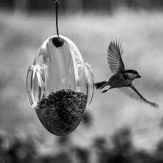 Eva Solo Vogelvoederhuisje - Bird Feeder