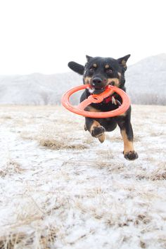 """@Matrix Partners' client, @Bionic Pet Products, is named """"BEST rubber toys ever!"""" on Pawsh: Culture For Pets.     AGREED."""