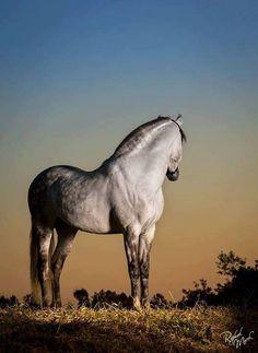 Fotografias de cavalo com – Raphael Macek