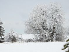 Winter outside Bishops Mills Ontario Canada Ontario, The Outsiders, Canada, Birds, Snow, Landscape, Winter, Outdoor, Winter Time