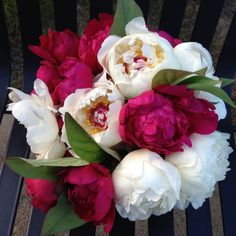 Festiva Maxima and Felix Supreme at Alaska Perfect Peony
