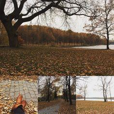 #spacer #katowice #jesień #autumn #autumn #trzystawy #dolinatrzechstawów #drzewa #liście #dywanliści #melancholia #melancholy #takidzień #wspominki #samotnyspacer #minionyrok