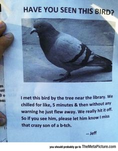 Have You Seen This Bird Right Here?